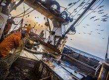 Приморские рыбаки увеличили вылов рыбы на 11% 1