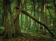 В РФ планируется создание базы данных «Цифровой лес»