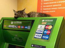 Сбербанк запустит возможность страховать кошек и собак
