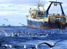 Российскую рыбу не пускают в Китай