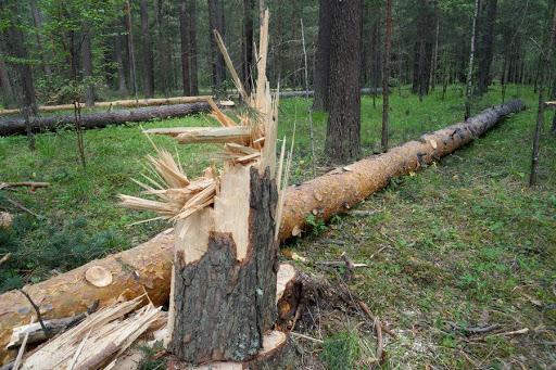 ЕГАИС лес превратится в ЛесЕГАИС?